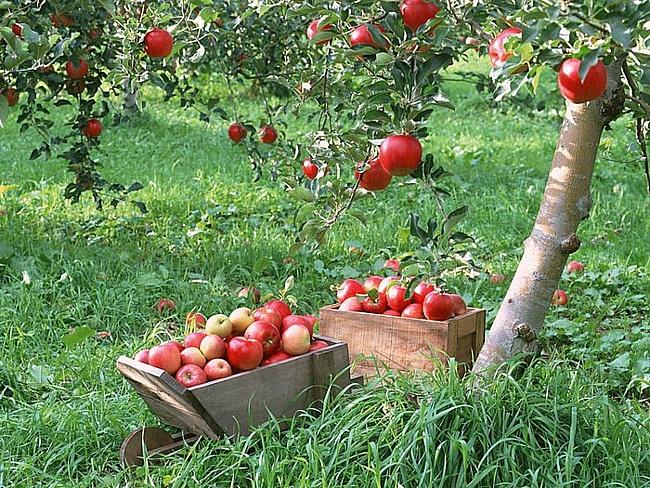 фрукты на даче фото